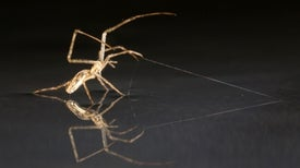 Airborne Spiders Can Sail on Seas