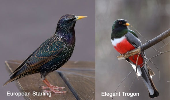 161 Bird-Watcher Apps for the iPhone—and They're All for the Birds [Slide Show]