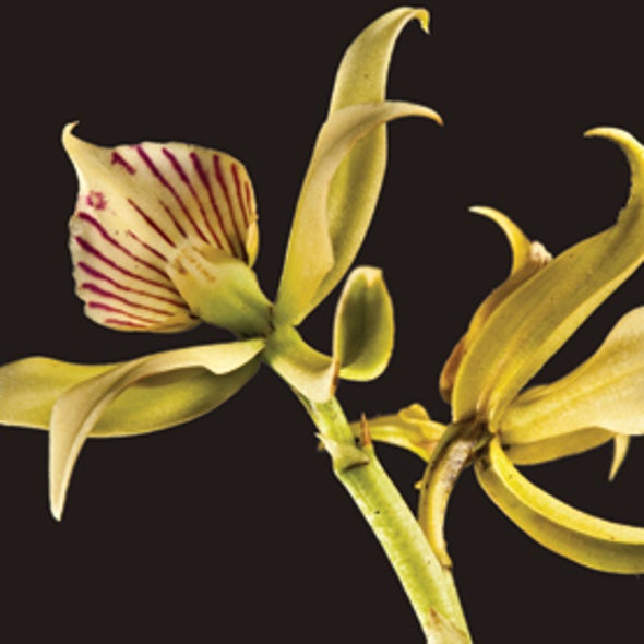 Recommended: <em>Deceptive Beauties:  The World of Wild Orchids</em>