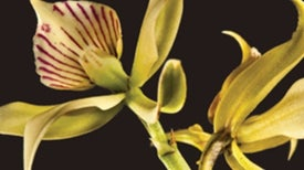 Recommended: <em>Deceptive Beauties: 