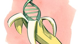 Find the DNA in a Banana