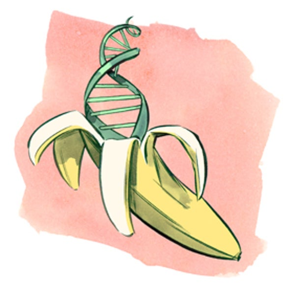 Find The Dna In A Banana Scientific American