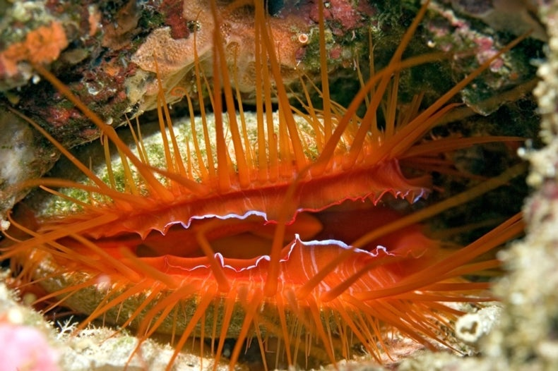 Source of Disco Clam's Flash Psyches-Out Scientists [Video]
