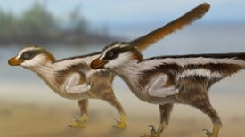 Tiny Footprints May Have Been Made by World's Smallest Nonavian Dinosaur
