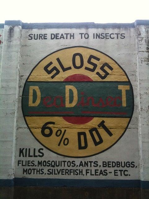 DDT Still Killing Birds in Michigan