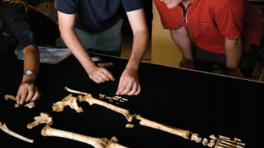 """Rethinking """"Hobbits"""": What They Mean for Human Evolution [Subscription/Purchase Required]"""