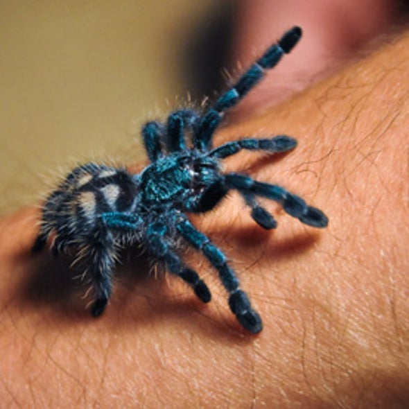2-Hour Therapy Cures Spider Phobia by Rewiring the Brain