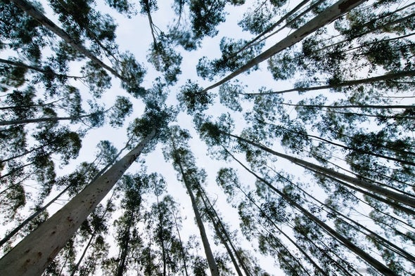 How Climate Change Strategies That Use Biomass Can Be More Realistic