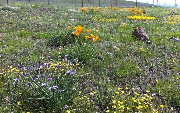 Low Biodiversity Brings Earlier Bloom