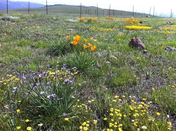 Low Biodiversity Brings Earlier Bloom