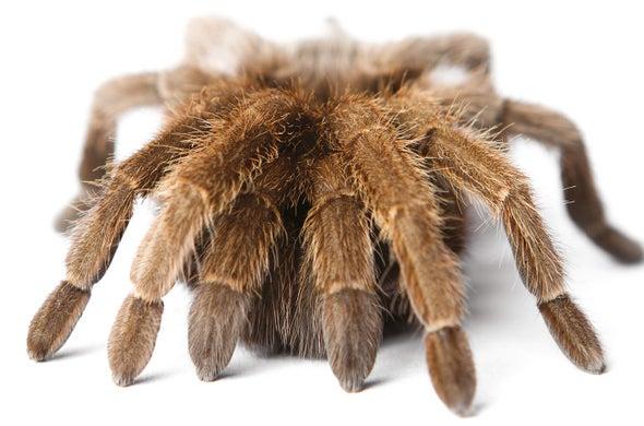 A New Twist on Treating Arachnophobia