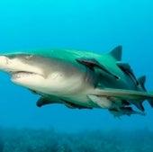 SHARK COGNITION