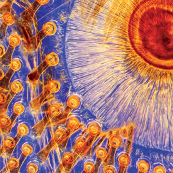 Life Unseen: Images of Magnificent Microscopic Landscapes [Slide Show]
