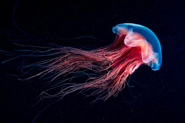 See Iridescent Jellyfish and Glowing Wonders of the Sea in World Oceans Day Photos