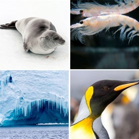 Bid to Protect Antarctic Waters and Marine Life Gets Second Chance