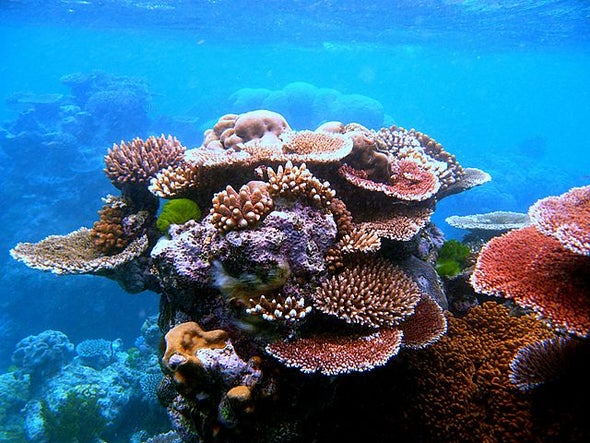 Coral Collapse Millennia Ago May Preview Global Warming Impact