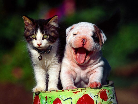 Dog and Cat People Reveal Why They Love Their Animals