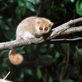 lemur, lice, map socialization