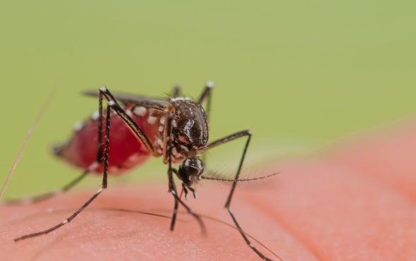 Utah Officials Confirm Elderly Zika Patient's Death