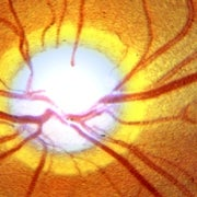Regrown Brain Cells Give Blind Mice a New View