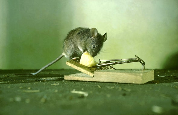 That Mouse in Your House--It's Smarter, Thanks to You