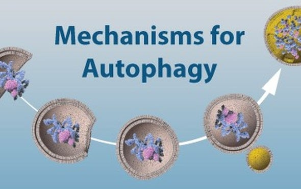 Nobel in Physiology or Medicine to Yoshinori Ohsumi for Autophagy Discoveries