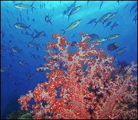 Tropical Abundance of New Species Found in Indonesian Seas