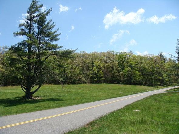 Roadside Shrubs Could Sink Carbon Pollution