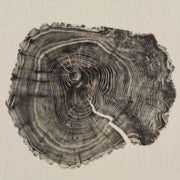 Tree Rings Tell a Tale of Climates Past