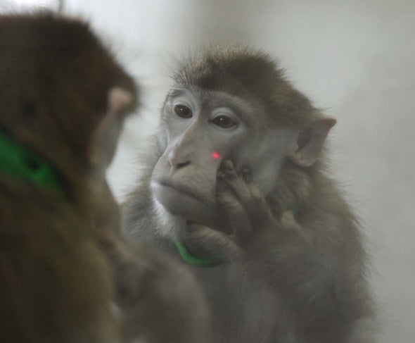 Monkeys Seem to Recognize Their Reflections