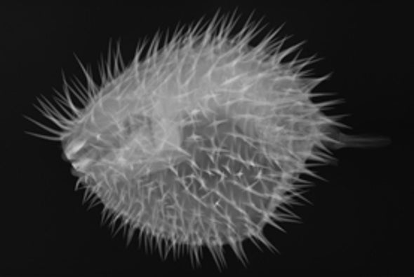 Penetrating Piscine Patterns: X-Rays Reveal What's Beneath Fishes' Scales [Slide Show]