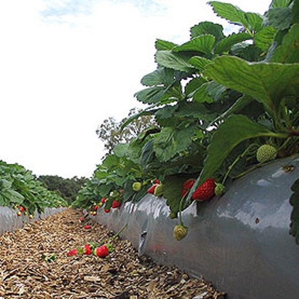 Women Living Near Pesticide-Treated Fields Have Smaller Babies