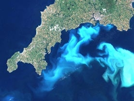 satellite view of plankton