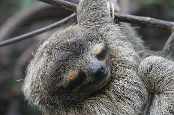 Why Sloths Leave the Trees to Defecate