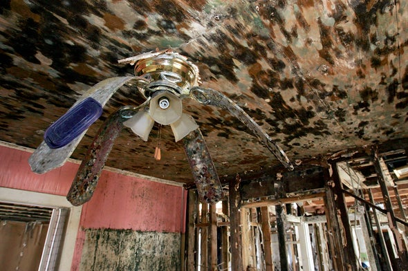 Beyond Bleach: Mold Is a Long-Term Problem after Flood and Disasters