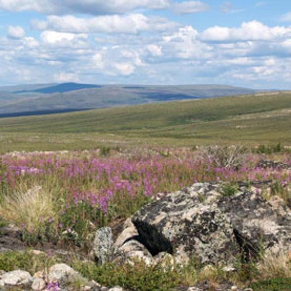 Thawing Tundra May Produce Less CO2