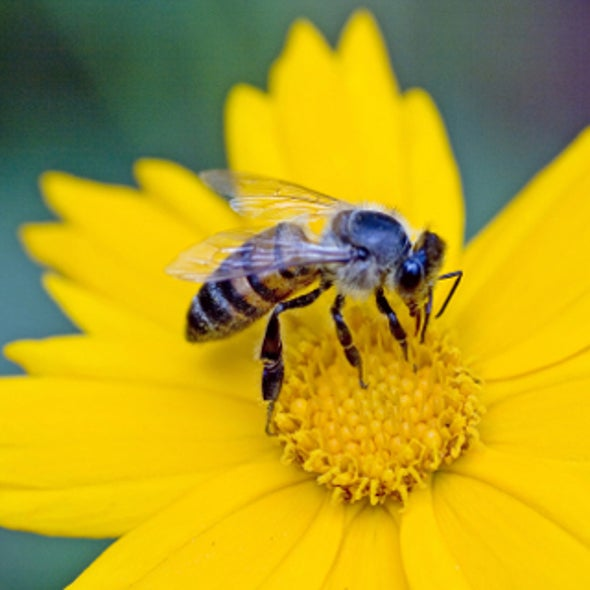 Is Life Too Hard for Honeybees?