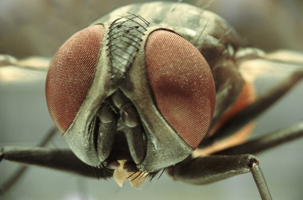 Insects Donate DNA to Unrelated Bugs