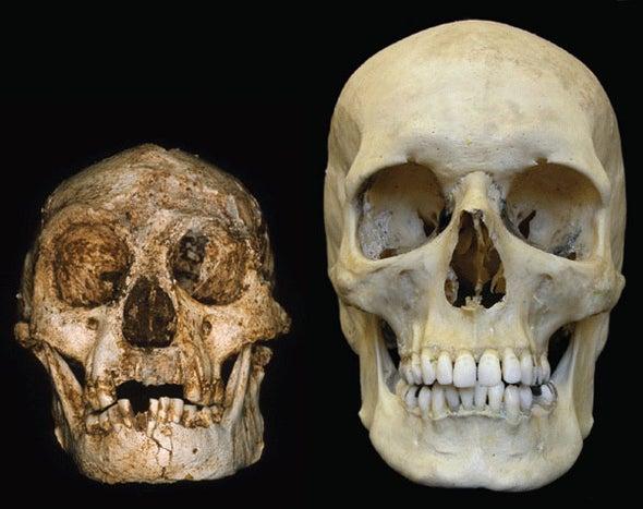 Image result for homo floresiensis lb1
