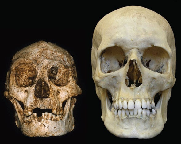 Image result for homo floresiensis lb1