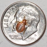 Top 10 Myths about Bedbugs [Slide Show]