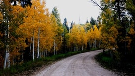 Cutting Down Trees May Save a Sprawling Forest
