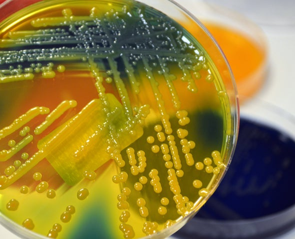 """Nightmare Bacteria"" Widespread in U.S. Hospitals"