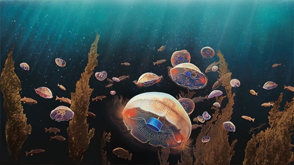 Cyborg Jellyfish Could One Day Explore the Ocean