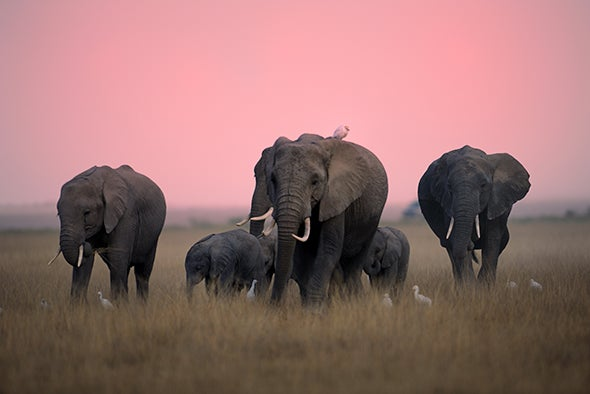 Where's My Elephant? High-Tech Collars Track Wildlife in Real Time