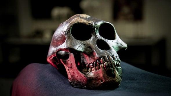 Human Teeth Likely Shrank Due to Tool Use