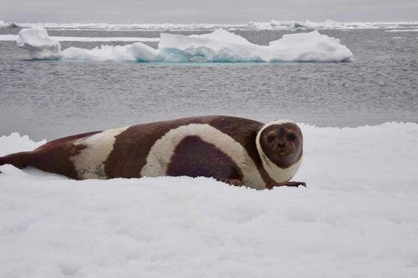 Marine Mammal EpidemicLinked to Climate Change