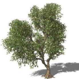 solar botanic, artificial tree, green power, alternative energy, wind, solar
