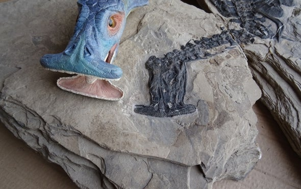 "Fearsome Dinosaur-Age ""Hammerhead"" Reptile Ate... Plants?"