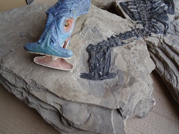 "Fearsome Dinosaur-Age ""Hammerhead"" Reptile Ate... Plants?"